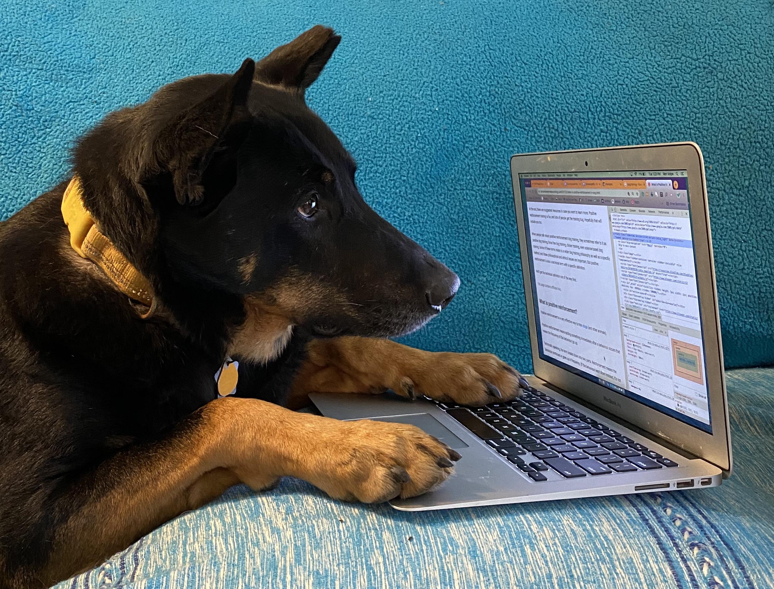 dog training technology